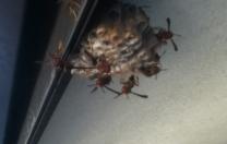 Hornets & Homeschool…
