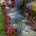 FlowerFalls