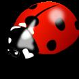 ladybird-1