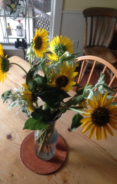SunflowersWild