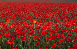 Remembrance Day…
