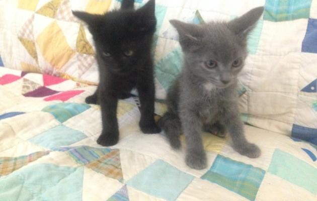 kitties3