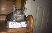 Shad's Out Box…