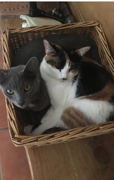 CatBoxes