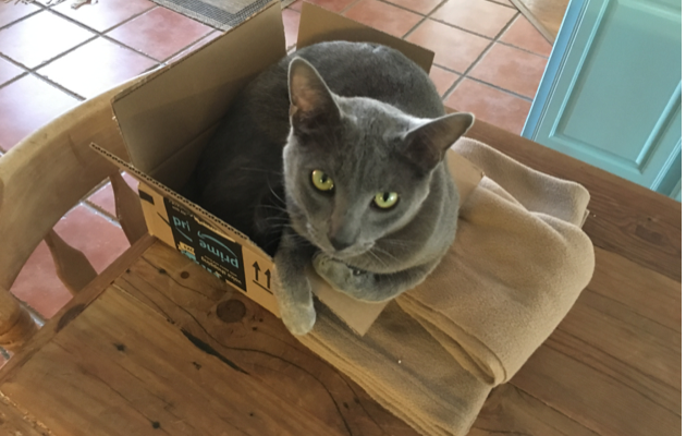 CatBoxes2