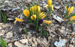 Signs of Spring…