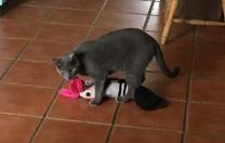 Some Cat…