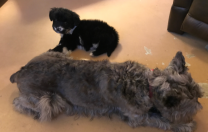 Daughts' New Dog…