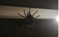 Tarantula…