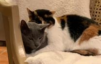 Callie's Chair…