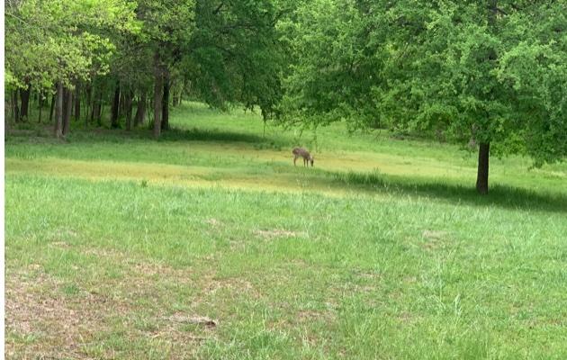 Doe a Deer, a Female Deer…