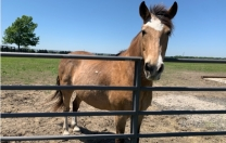 Horse Farm…