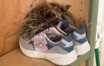 Nest in my Tennie…