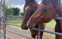 A Magnificent Pair of Thoroughbreds…