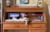 Sharing Office Space…