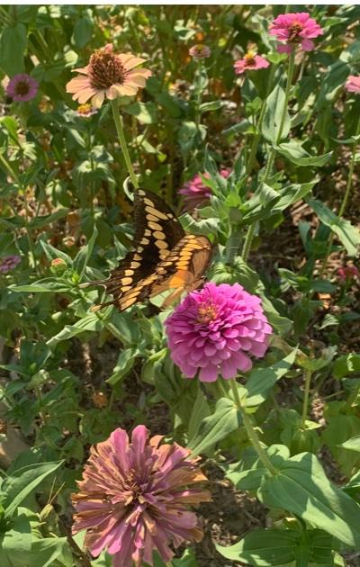 FlowersButterfly