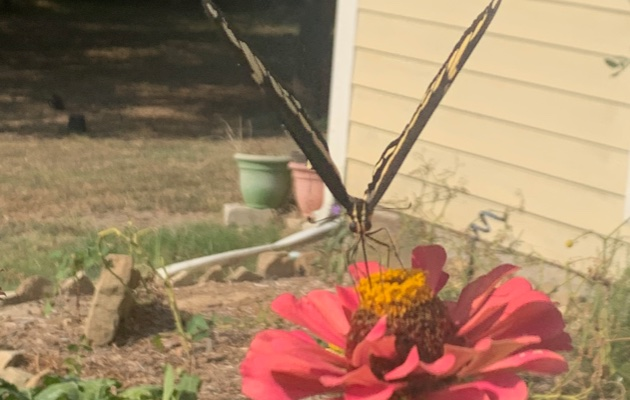 FlowersButterfly2