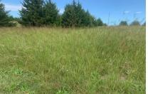 Hubs' Field…My Field…