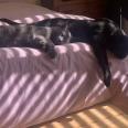 CatsLazy