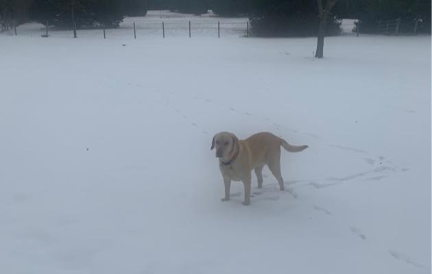 SnowCharlie