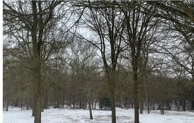 SnowD1Trees