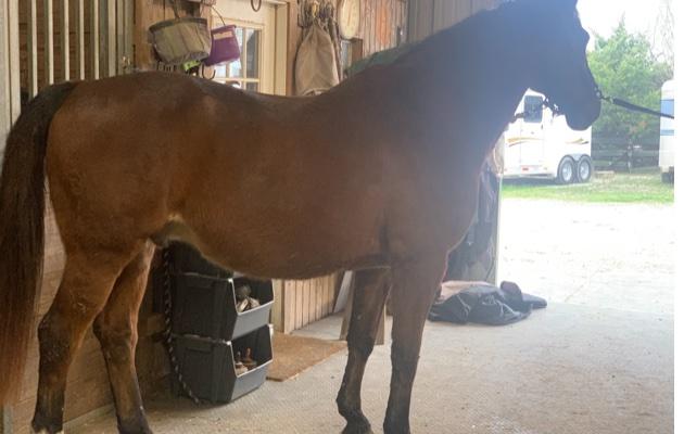 HorseCharm