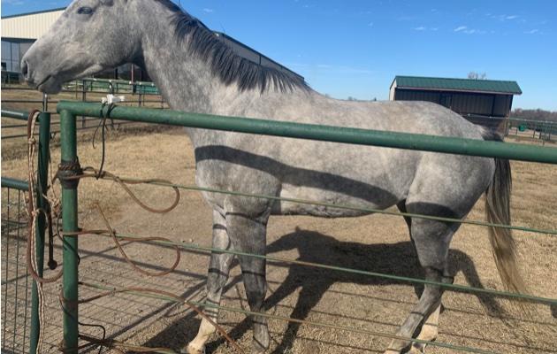 HorsePrincess