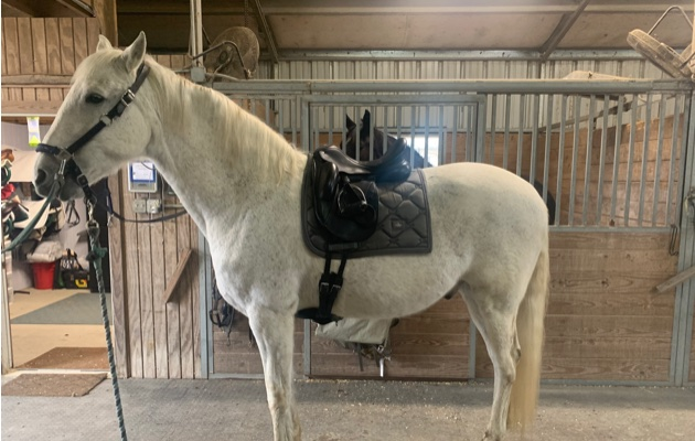 HorseStu