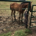 HorseFindley2