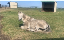 A Horse of Course 2…