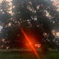 SunrisePecan